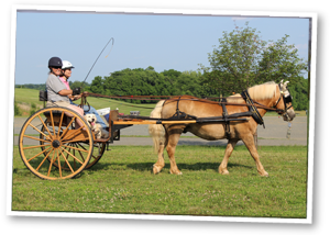 Therapeutic Carriage Driving