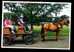 Gable team Programs Carriage Driving